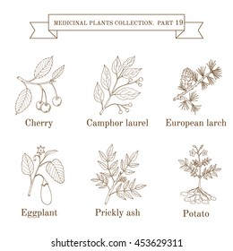 Vintage collection of hand drawn medical herbs and plants, cherry, camphor laurel, larch, eggplant, prickly ash, potato. Botanical vector illustration
