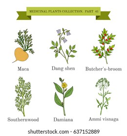 Vintage collection of hand drawn medicinal herbs and plants. Botanical vector illustration