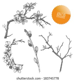 Vintage collection of vector hand drawn blooming  tree twig isolated on white