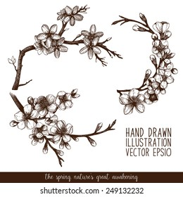 Vintage collection of vector hand drawn blooming fruit tree twig isolated on white. Cherry tree twig sketch set