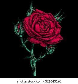 Vintage colored ink pen drawn rose isolated on a black background. Vector illustration