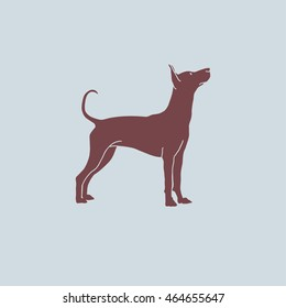 Vintage contour illustration of one brown color dog of Xoloitzcuintli mexican hairless breed standing on blue background