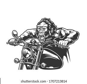Vintage cruel gorilla head moto rider driving motorcycle in monochrome style isolated vector illustration