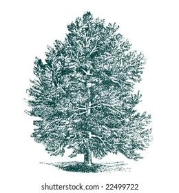 vintage detailed vector tree.