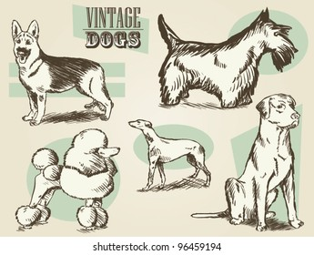 Vintage Dogs/Classic Retro Ornate Dog Collection