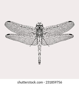 Vintage dragonfly isolated black silhouette vector drawing