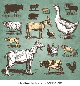 Vintage farm animals drawings set, vector illustration. Livestock and poultry icons. Retro engraving style elements for your design.