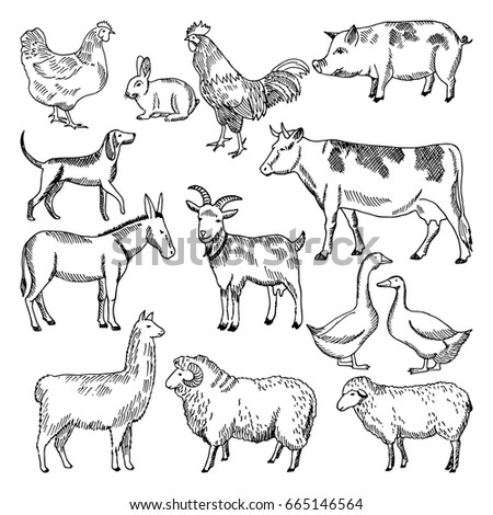 Image of: Cartoon Vintage Farm Animals Farming Illustration In Hand Drawn Style Animal Farming Sketch Drawing Chicken Shutterstock Vintage Farm Animals Farming Illustration Hand Stock Vector royalty