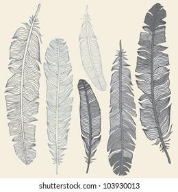 Vintage Feather vector set. Hand-drawn illustration.
