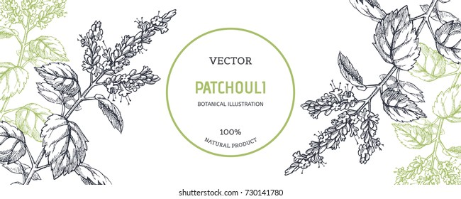 Vintage floral background with plants. Vector botanical illustration with patchouli branches. Herbal texture. Component for aromatic oil