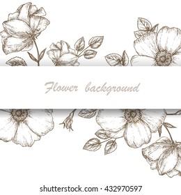Vintage flower background. Dog rose sketch card. Hand drawn background illustration.  Wild