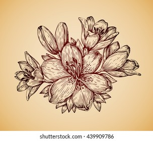 Vintage flower. Hand-drawn retro sketch lily. Vector illustration