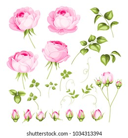 Vintage flowers set over white background. Wedding flowers bundle. Flower collection of watercolor detailed hand drawn roses. Vector illustration.