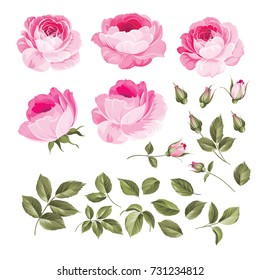 Vintage flowers set overwhite background. Wedding flowers bundle. Flower collection of watercolor detailed hand drawn roses. Vector illustration.