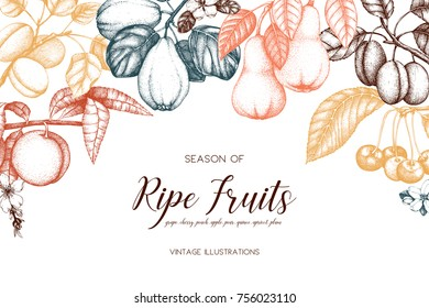 Vintage frame with ripe fruits and berries  illustrations - apple, pear, cherry, peach, apricot, quince, grapes. Hand drawn harvest design. Summer or autumn template on white