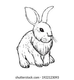Vintage Graphic Rabbit Vector printing, bunny, sketching