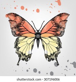 vintage hand drawing butterfly, ink and watercolor.