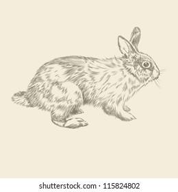 Vintage hand drawing rabbit vector eps 8