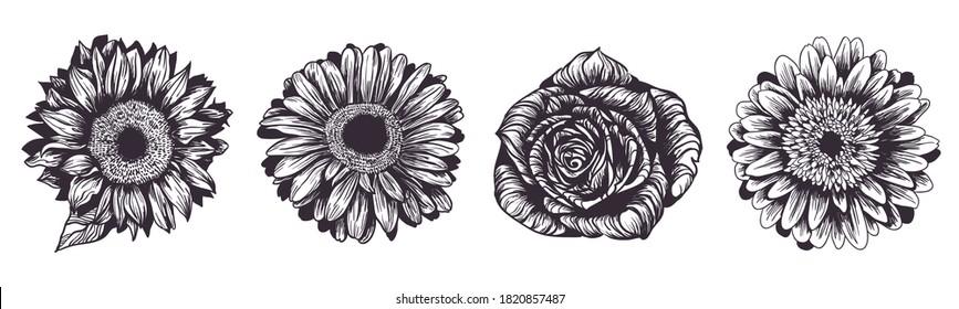 Vintage hand drawn flowers set isolated on white background. Sunflower, rose and gerbera garden plants. Vector illustration. Ink sketch for wedding design