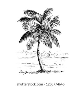 Vintage hand drawn illustration with palm tree in engraving style. Sketch of a tree isolated on white for design