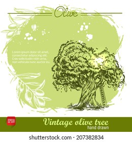 Vintage hand drawn sketch style olive tree with ladder on watercolor grunge background. Sketch style vector organic food illustration.