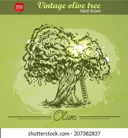 Vintage hand drawn sketch style olive tree with ladder on watercolor grunge background