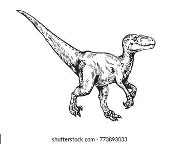 Vintage Hand Drawn Velociraptor Dinosaur On White Background Illustration