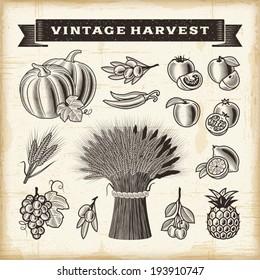 Vintage harvest set. Fully editable EPS10 vector.