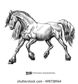 Vintage horse engraving or ink drawing isolated