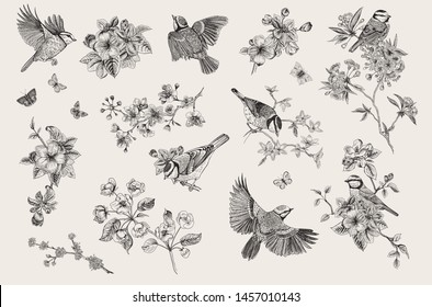 Vintage illustration. Blossom garden with tits. Birds and flowers. Set