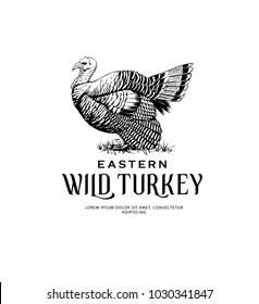 Vintage Illustration of Eastern Wild Turkey