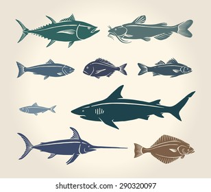 Vintage illustration of fish and seafood over white background