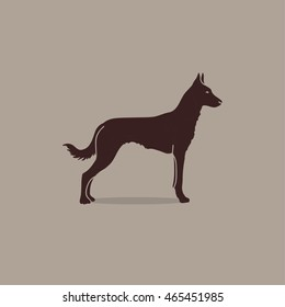 Vintage illustration flat portrait of one beautiful malinois dog standing on brown background. Belgian sheepdog.