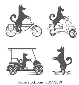 Vintage Illustration fun dog with grunge effect for posters and t-shirts. Funny dog on scooter, golf cart and skateboard