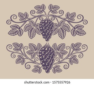 Vintage illustration of a grape branch on the white background. Design element for alcohol branding.