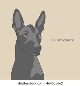 Vintage illustration head portrait of one black color dog of Xoloitzcuintli mexican hairless breed of standard size on light brown background with text aside
