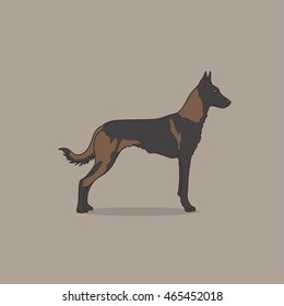 Vintage illustration portrait of one beautiful malinois dog standing on brown background. Belgian sheepdog.