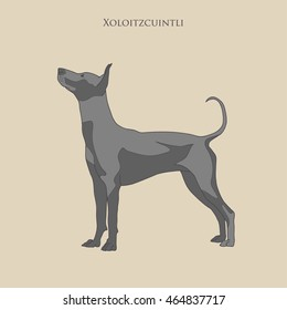 Vintage illustration  portrait of one black color dog of Xoloitzcuintli mexican hairless breed of standard size  standing on light brow background with text above