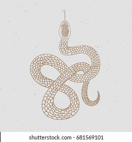 Vintage line snake. Vector illustration.