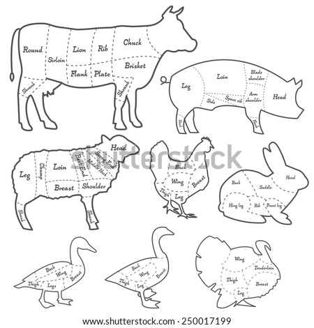 Vintage Outline Diagram Meal Cutting Stock Vector Royalty Free