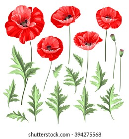 Poppy Leaf Images Stock Photos Vectors Shutterstock