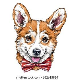 Vintage retro hipster style sketch of funny Pembroke Welsh corgi puppy. vector illustration.