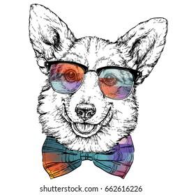 Vintage retro hipster style sketch of funny Pembroke Welsh corgi dog in glasses. vector illustration.