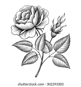 vintage rose flower engraving calligraphic Victorian style tattoo botanical vector illustration
