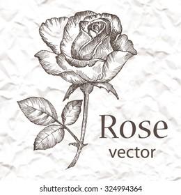 Vintage rose. Hand drawn vector illustration on grange background.