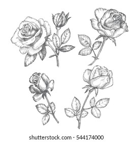 Vintage roses. Black and white graphics.