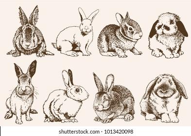 Vintage set of bunnies ,vector illustration