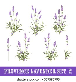 Vintage set of lavender flowers elements. Botanical illustration. Collection of lavender flowers on a white background. Watercolor lavender set.  Lavender flowers isolated on white background.