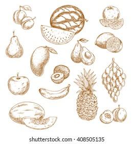 Vintage sketches of fruits with grape, orange, lemon, apple, peach, pear, mango, avocado, banana, pineapple, kiwi, watermelon, plum and melon. Retro sketches for recipe book, vegetarian menu design