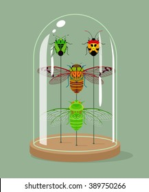 Vintage taxidermy cicadas and shield bugs collection in bell jar. Vector illustration. Insects protection concept.